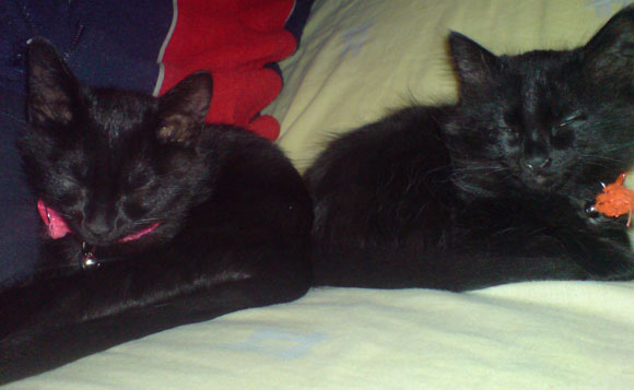 our cats!